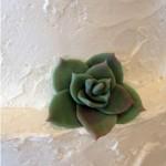 Marzipan succulent detail